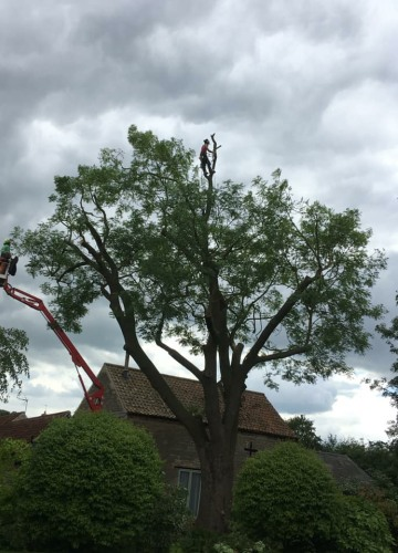 B & B Tree Specialists Lincolnshire
