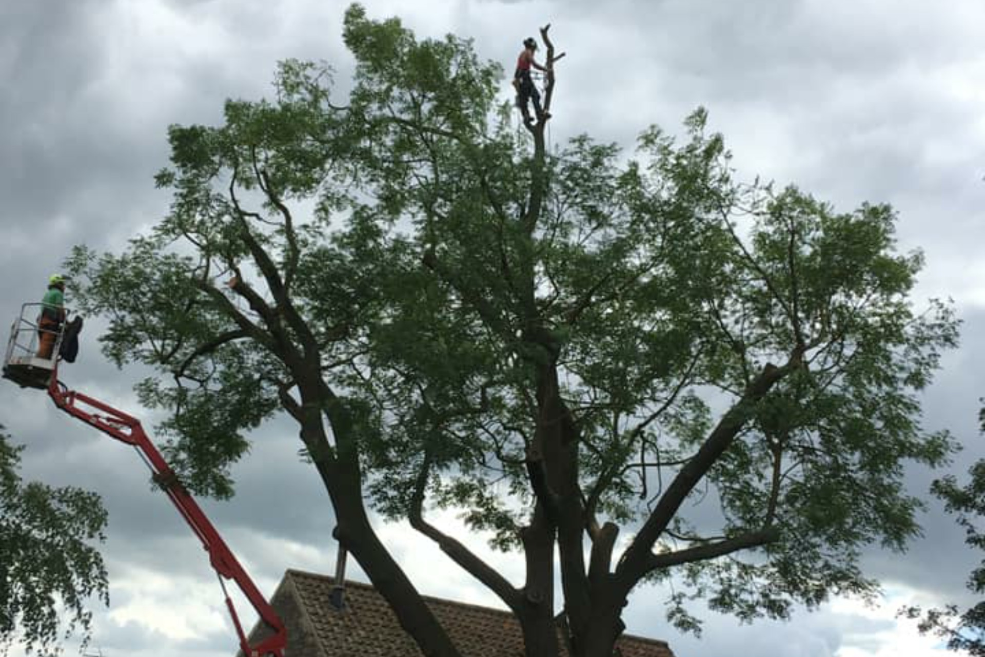 Tree Surgery Lincolnshire